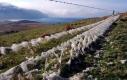 hoy-rackwick-wool-fence